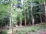 nishimuraforest.JPG